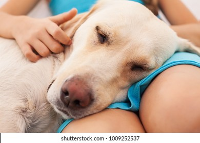 Dog enjoys the company of her human friend - closeup on little girl hands and her pet