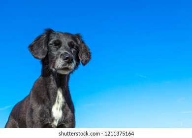 dog enjoys the sun with closed eyes