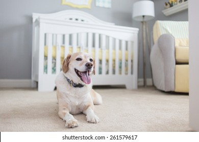 Dog is excited about new baby, waiting in the nursery