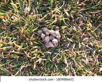 Dog excrement on grass under soft sun light with little coconut seeds in it