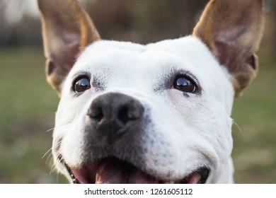 Dog eyes looking at you