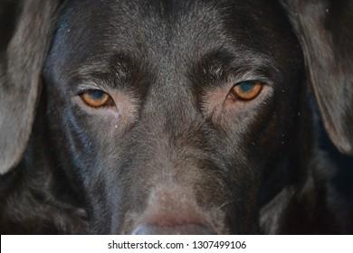 dog face close-up