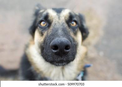 dog face closeup