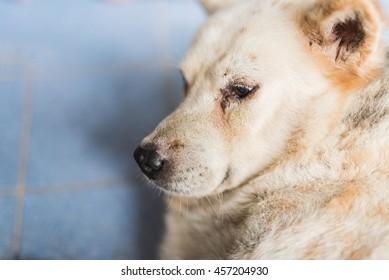 Dog face lying on the floor