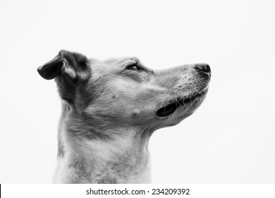 dog face, portrait