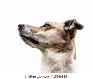 dog face portrait