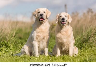 dog family portrait