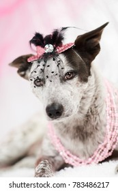 Dog in fancy pink hat with veil