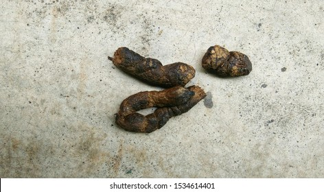 Dog feces on the cement floor, shit dog on cement floor