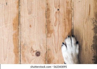 dog feet and legs on wood. Close up image of a paw of homeless dog. skin texture. Resting dog's paw close up