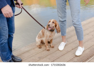 The dog is at the feet of its owners. Dog walking in the countryside. Pedigree spaniel