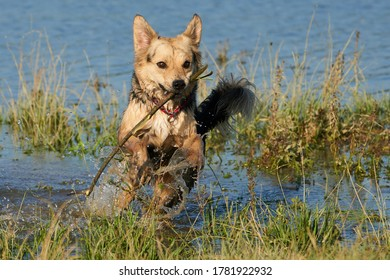 A dog fetching in the water