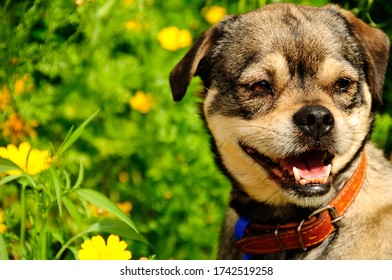 A dog in field of daisies