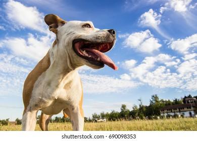 Dog in field portrait