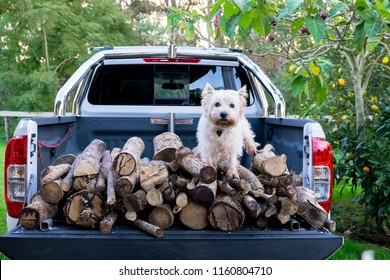 Dog and firewood logs on back of ute delivery truck in Kerikeri, Far North District, Northland, New Zealand, NZ