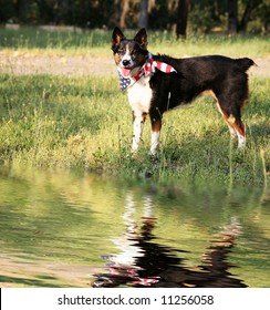 Dog with Flag Bandanna Standing Near Water with Reflection