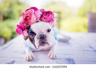 Dog in a flower crown