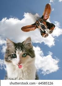 a dog flying towards a little kitten