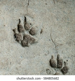 Dog foot print on concrete floor