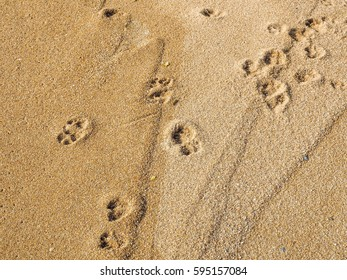 The dog foot print on the sand.