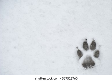 Dog foot print in a snow, photo for background
