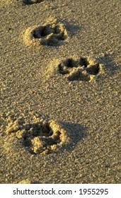 dog foot prints