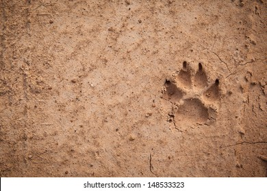 Dog footprint on the earth