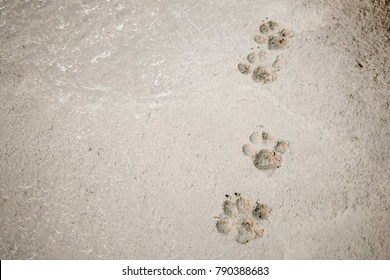 Dog footprints on cement concrete floor background
