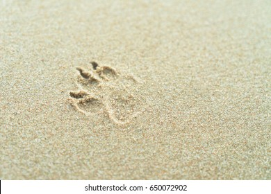 Dog footprints on sand on the beach at morning.
