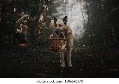 dog in the forest holds a basket