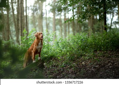 dog in the forest, walk with a pet. Spring mood