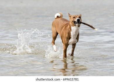 Dog. Fortuna Numa.