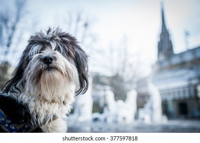 dog and fountain