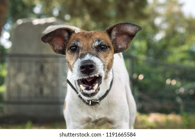 Dog fox terrier on walk, muzzle close-up