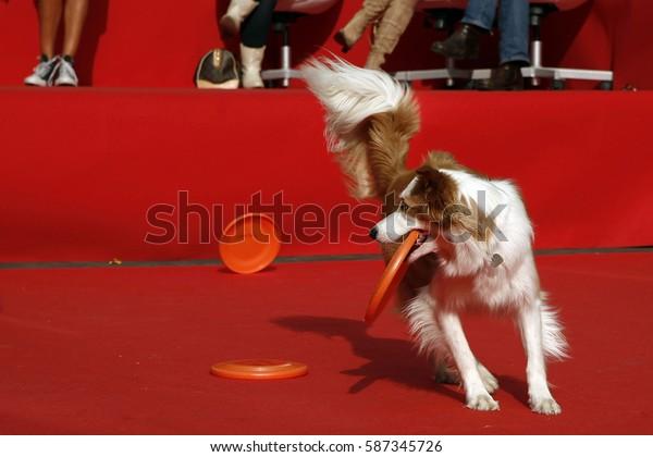 Dog freestyle