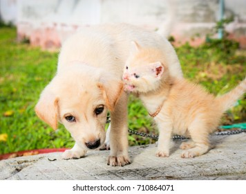 The dog is a friend with a kitten.