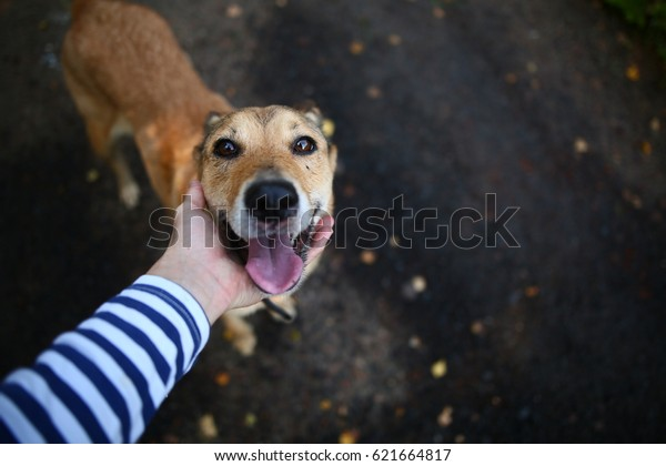 Dog friend of the owner