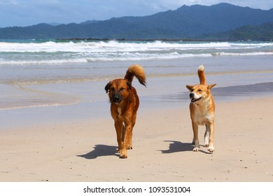 Dog friends on a beach - Sabang beach in Palawan island, Philippines.