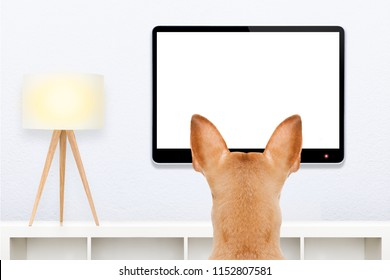 dog in front of a blank and empty tv television or pc computer screen,  watching  and looking very carefully what is on