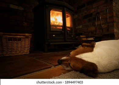 Dog in front of fire, jack russell keeping warm but the log burner
