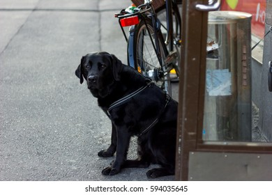 Dog in front of a grocery store