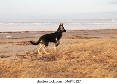 the dog in front of the hunter