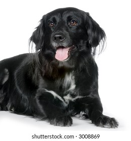 dog in front of white background