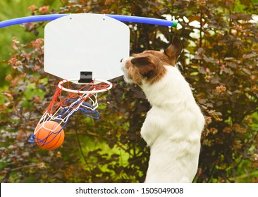 Dog as a funny basketball player scores swish goal