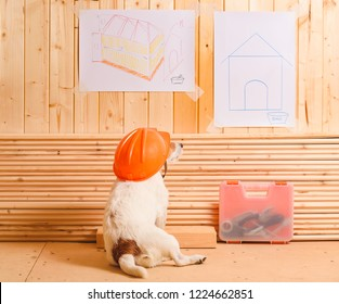 Dog as funny constructor with hardhat looking at blueprint of kennel