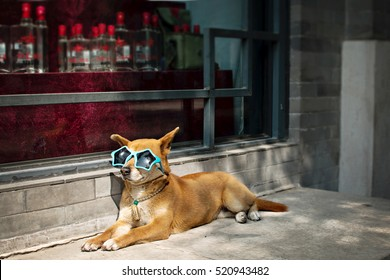 Dog in funny Sunglasses situated on a sidewalk