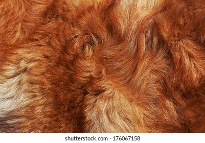 Dog fur close-up. bright-red, yellow, gray, white color.