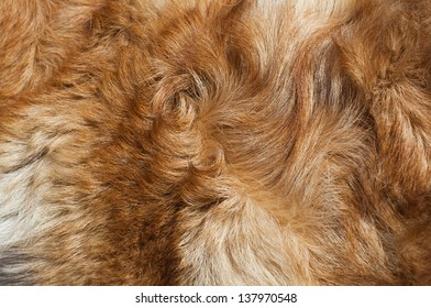 Dog fur close-up. red, yellow, gray, white color.