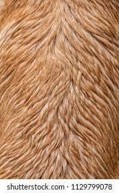 Dog fur wet texture