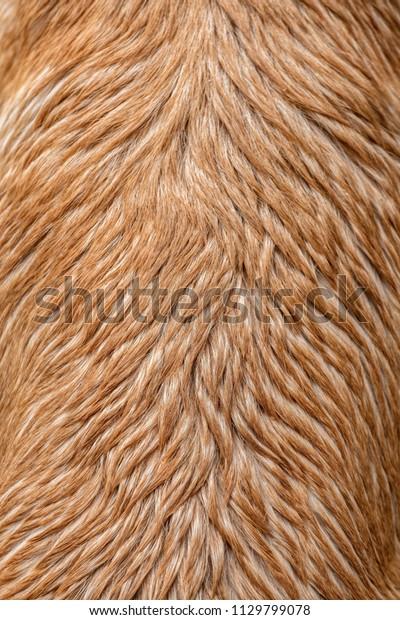 Dog fur wet texture